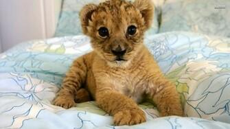 Lion cubs image lion cubs 36139549 1920 1080jpg