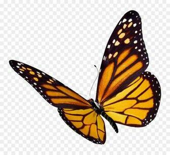 Monarch butterfly Desktop Wallpaper Clip art   flock png download