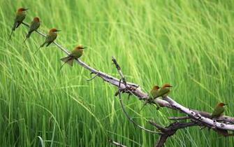 wallpaper branch birds birdjpg