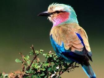 Japan Beautiful Birds Wallpapers for Desktop