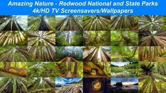 Amazing Nature Redwood National and State Parks 1 4KHD