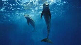 Dolphins 1920x1080 HD Image Animals Marine