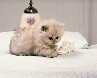 cute cat wallpaper Funny Animal
