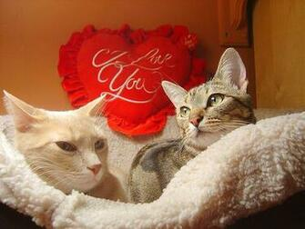 Download cute valentines day kittens cat pic