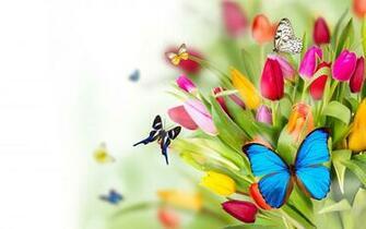 Flowers and butterflies wallpaper   SF Wallpaper