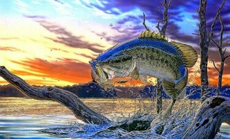 Bass Fishing Wallpaper Wallpapers Gallery
