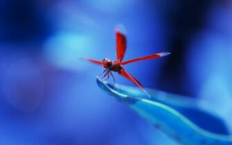 Dragonflies images Dragonfly HD wallpaper and background photos