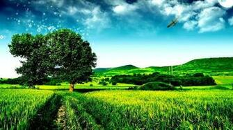 Nature Tree Go Green HD Wallpaper Nature Design Pinterest