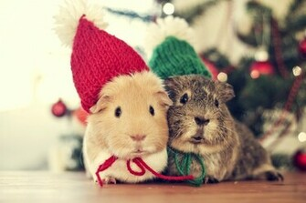 Christmas Animals Cute Winter Cold Cozy Couple Holiday Mouse wallpaper