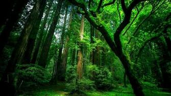Natural green forest wallpaper Full HD Wallpapers Points