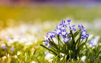 Spring Pic   Wallpaper High Definition High Quality Widescreen