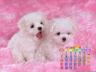 dogs cute desktop wallpaper download dogs cute wallpaper in