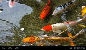 Download Koi Fish Live Wallpaper for Android by Angkor   Appszoom