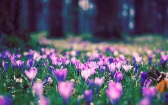 Spring Flowers Wallpapers image gallery