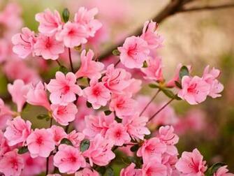 Spring Flowers Wallpapers HD Pictures One HD Wallpaper