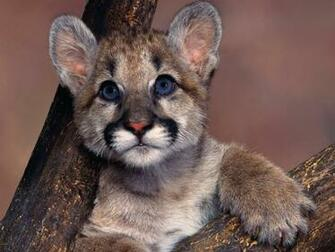 wildlife images WildLife HD wallpaper and background