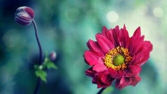 nature flowers pink hd wallpaper   Background Wallpapers for your