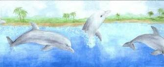 Dolphin Wallpaper Border   Wallpaper Border Wallpaper inccom