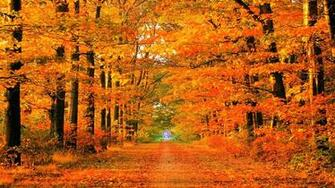 Fall Backgrounds Download