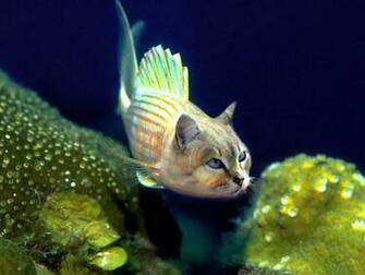 funny fish pictures funny fish names funny looking fish funny fish