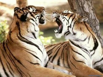 Wild Animal Wallpaper Wild AnimalFunny AnimalMating VideosPictures