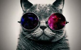 Cool Cat Wallpaper 71 images