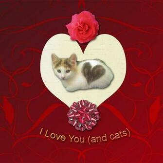 Valentines Day Card For Cat Lovers Pictures Of Cats