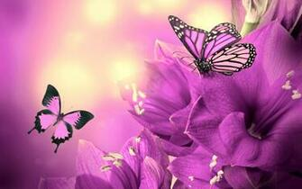 Butterfly And Flower Wallpaper