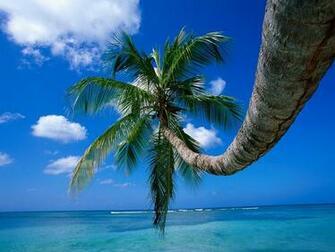 XP wallpaper Palm Tree