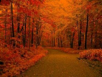 Autumn Road Background Twitter Backgrounds Wallpaper Images