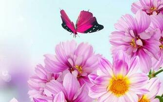 Pink Flowers Wallpaperswallpapers screensavers