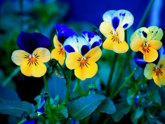 1152x864 Spring Flowers desktop PC and Mac wallpaper