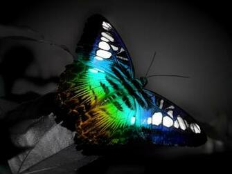 Colorful Butterfly   Wallpaper 30919