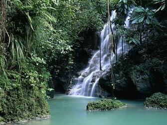 Forest Jamaica Wallpaper 1600x1200 Forest Jamaica Waterfalls