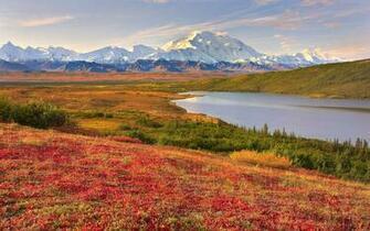 Denali National Park Beautiful Landscape HD Wallpaper