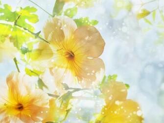 Summer Flowers Wallpaper wallpaper Summer Flowers Wallpaper hd