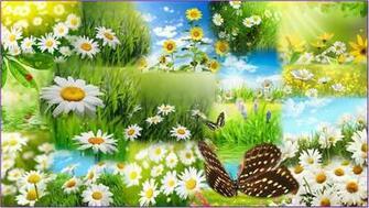 Spring Flower Desktop Backgrounds