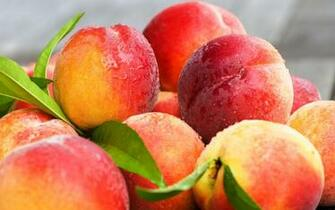 Fresh Peaches Fruit Wallpapers   2560x1600   1118038