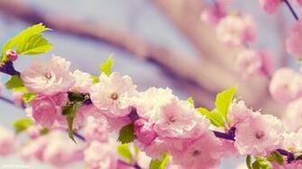 Spring Flower Wallpapers wallpaper Spring Flower Wallpapers hd