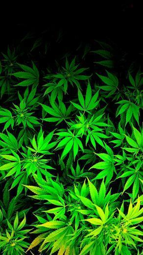 iPod iPhone weed marijuana cannabis Wallpaper by thetruemask on