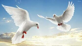 Flying Birds Wallpapers Photos Images in HD