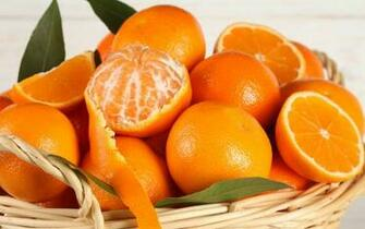 Orange fruits wallpaper 1920x1200 229856 WallpaperUP