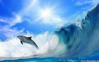 Dolphin Wallpapers Download Friendly Fish Dolphins Wallpaper