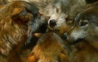 Wallpaper animals realism predators pack wolves painting