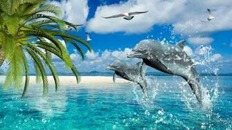 Dolphin Desktop Wallpaper Dolphins Pictures Cool Wallpapers