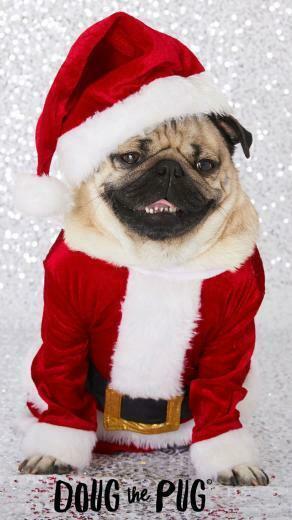 FREE Doug the Pug Christmas Wallpapers   ClairesBlog Slime