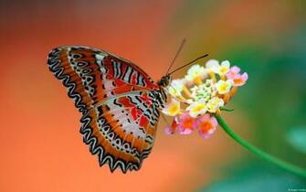 1531 Butterfly HD Wallpapers Background Images