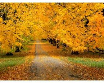 Autumn Road Wallpapers   2560x2048   2311480