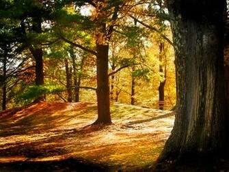 Natural Beautiful Trees Wallpapers Natural HD Wallpapers Natural