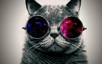 Cool Cat HD Wallpapers Widescreen